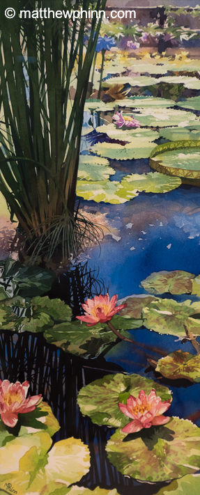 Waterlilies at Kew